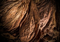 Overhead shot of finest tobacco as a background with a stream of light