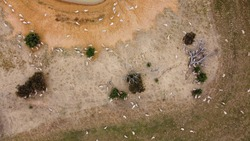 overhead view of a large flock of sheep resting in the sun and some walking to take a drink from the low level dam watering hole on a large farm, rural Victoria, Australia