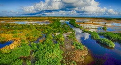 Overhead view of Everglades swamp, Florida - USA.
