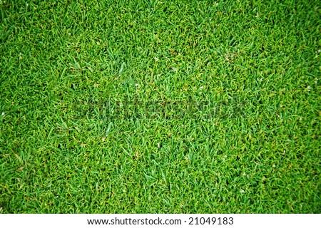 Overhead view of grass field