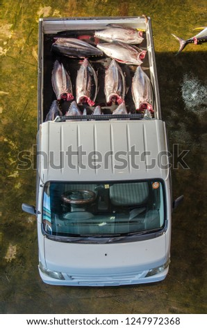 Overhead view of lorry transporting freshly catched tuna fish on lorry