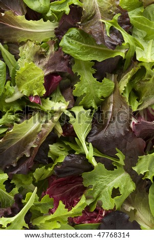 Overhead view of mixed salad leaves