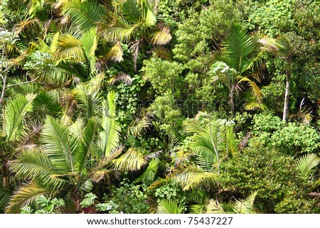 Overhead view of tropical vegetation at El Yunque National Forest in Puerto Rico