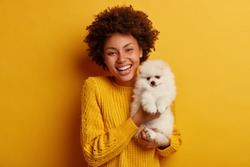 Overjoyed girl holds nice pretty fluffy white spitz, owner of breed dog, have photoshoot together, have positive time at party, isolated on yellow wall. Ambitious volunteer takes care of animals