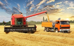 Overloading the grain from the combine into a car in the field
