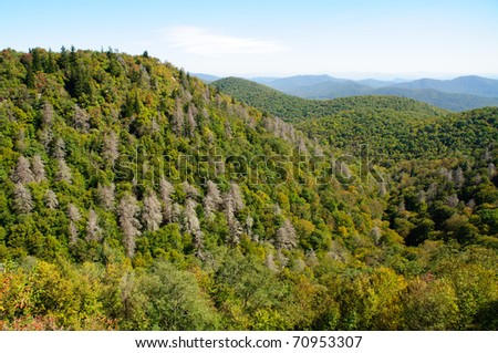 overlook of forest and hills with dead trees