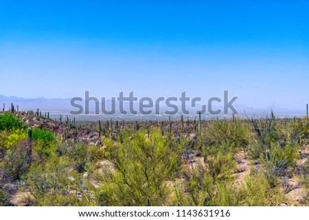 Overlooking a desert valley with green foliage and cactus with hazy mountains under clear blue sky.
