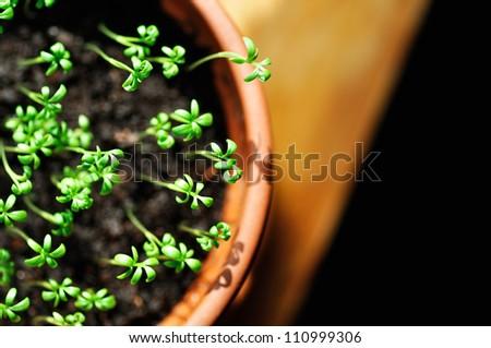 overlooking green seedling