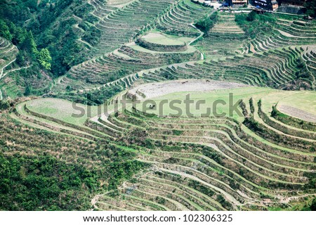 overlooking the terraced fields in longsheng county,guangxi province, China