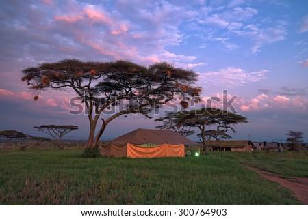 Overnight in tents in savanna camp during safari