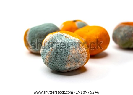 Overripe tangerines. Covered with mold, fungus. Rotting citrus fruits on a white background. The process of spoiling the fruit. Rotten tangerine. Stok fotoğraf ©