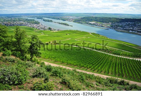 overview of vineyard and river of Rhein