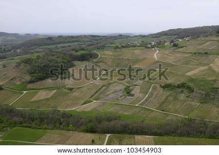 Overview of well-known Vineyards of Chateau-chalon in France