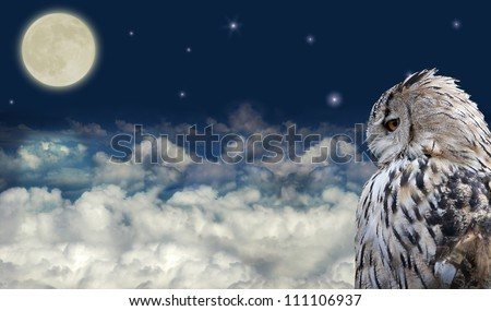 owl at dark sky with large...