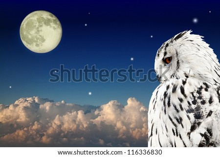 owl at dark sky with large clouds and full moon