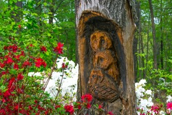 Owl Family carved ino a tree with in a woodland Scene-Azalea Walk Reserve-Gibson County Indiana