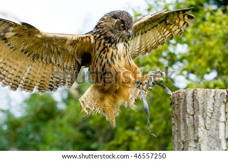 owl flew to a tree trunk