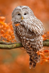 Owl in the autumn forest yellow background