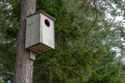 Owl nesting box in sweden
