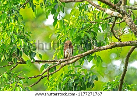 Owl on branch #1177271767