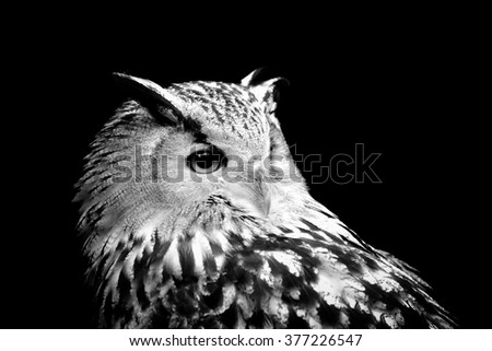 Owl on dark background. Black and white image