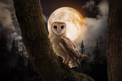 Owl on tree in misty forest under full moon at night