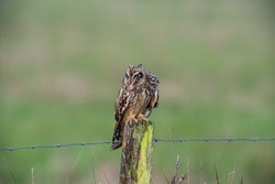 Owl perched on old wooden post gripping with talons and yellow eyes