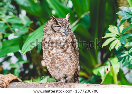 Owl resting on a tree and resting
