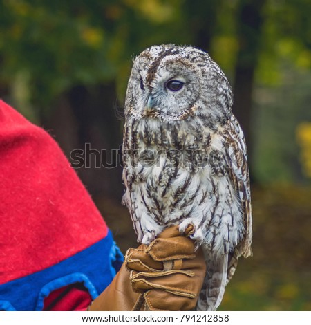 Owl sitting on a human hand. Handmade  The pictures with the bird.