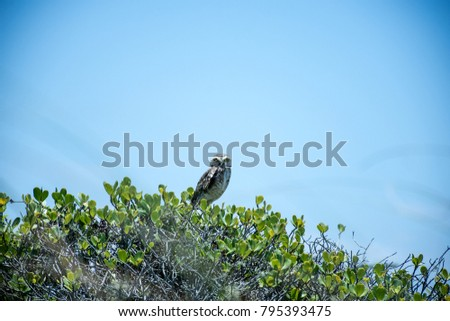 owl sitting over the bushes in a blue sky day