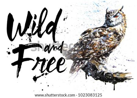 Owl watercolor birds animals predator wildlife