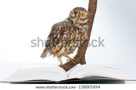 Owl while studying