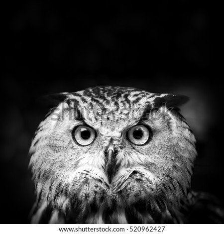 Free Photos Owl Face Avopixcom