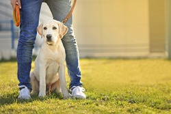 Owner and Labrador dog sitting on green grass