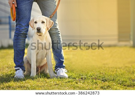 Owner and Labrador dog sitting on green grass #386242873