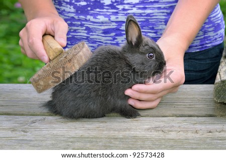 Owner Brushing Pet Dwarf Rabbit