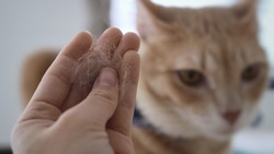 Owner hand holding pet fur clump with blurred two cat