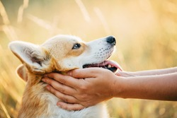 Owner holding dog's face in hands, caressing her dog gently on sunset