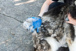 Owner of the dog is combing out the dog's fur with a special glove. Pet care. Equipment for caring domestic pets and animals wool.