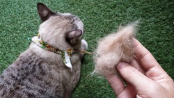 owner's hand showing pet fur clump after grooming cat.