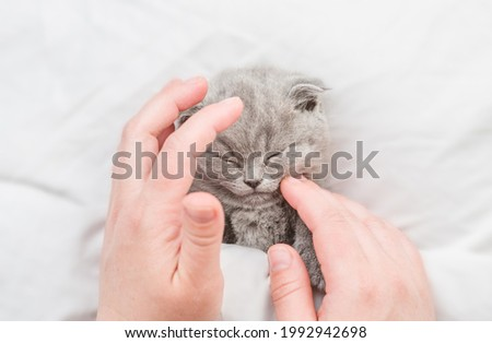 Owner strokes the sleeping kitten with his hands. Top down view