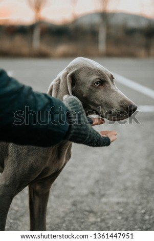 Owner stroking dog at outdoor