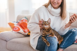 owners love and tenderness to a cat. beautiful bengal kitty sits on woman's lap. girl scratching pets ear