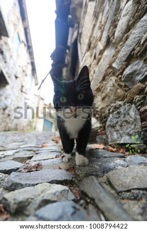 Owning a cat or kitten can provide multiple benefits for your health. Askas  is a small village in Pitsilia region in the Nicosia District on the island of Cyprus.