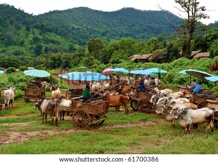 Ox Carriage with Green jungle as a background - stock photo