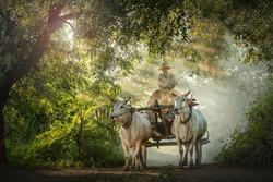 ox carts in Myanmar