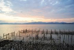Oyster farm, Shellfish farm, oysters mussel, oyster farming, farming Shellfish