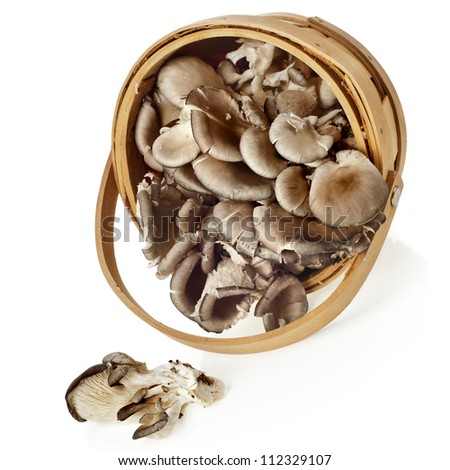 oyster mushroom in basket on white background