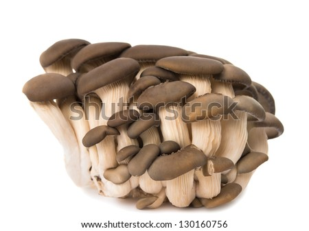 oyster mushrooms isolated on white background