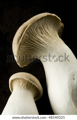 Oyster mushrooms on black background